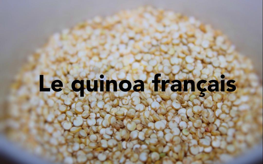 Du quinoa français produit en Champagne