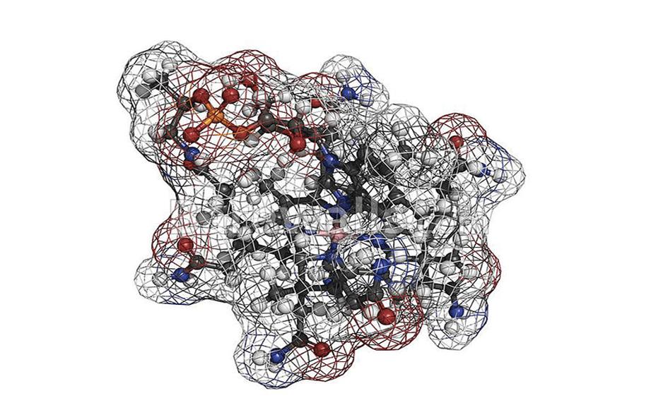 b12 molecule B12 complement alimentaire cobalamine argalys